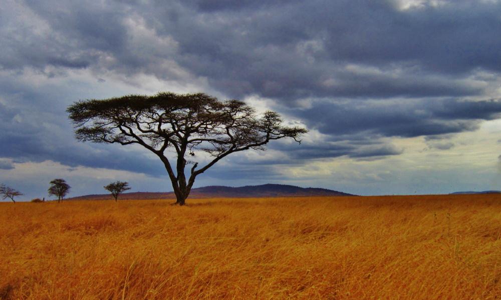Acacia-Tree-Serengeti-Africa