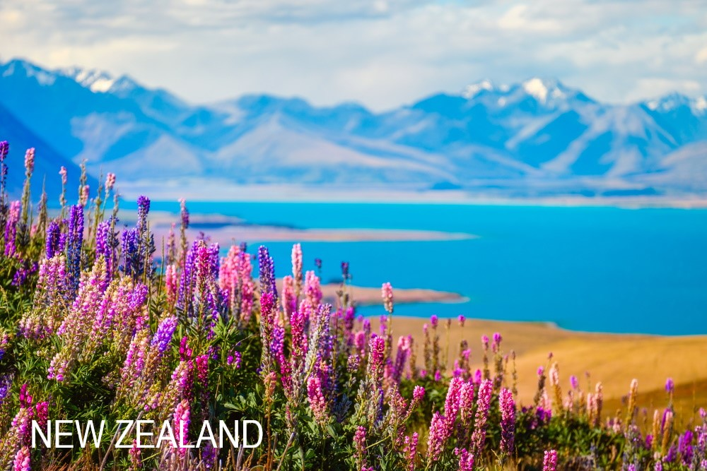 Licensed-Landscape-view-of-Lake-Tekapo-flowers-and-mountains-New-Zealand