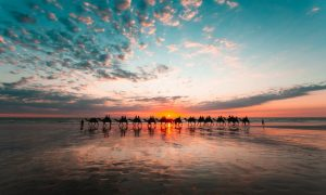 A-sunset-view-of-the-famous-camels-silhouetted-as-they-walk-along-Cable-Beach-in-Broome-Western-Australia