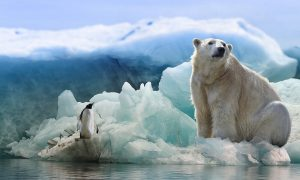 Arctic-Antarctic-polar-bear-penguin
