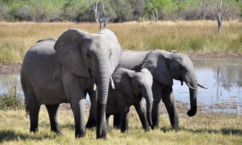 Elephants-baby-safari-africa