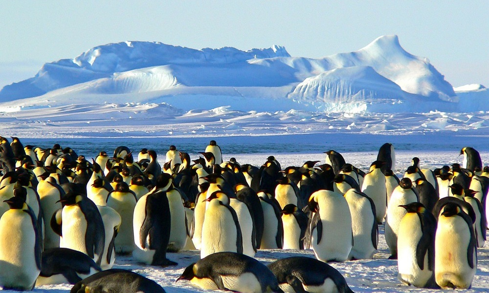 Emperor-group-of-penguins-on-ice