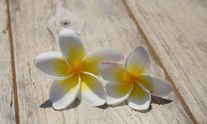 Aloha-Hawaii-frangipani-flower-lei