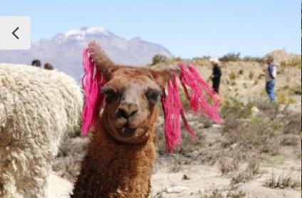 Intrepid-Peru-Family-Trip