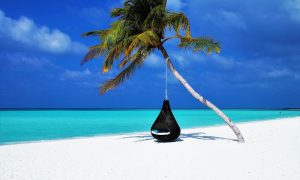 Maldives-palm-tree-hammock