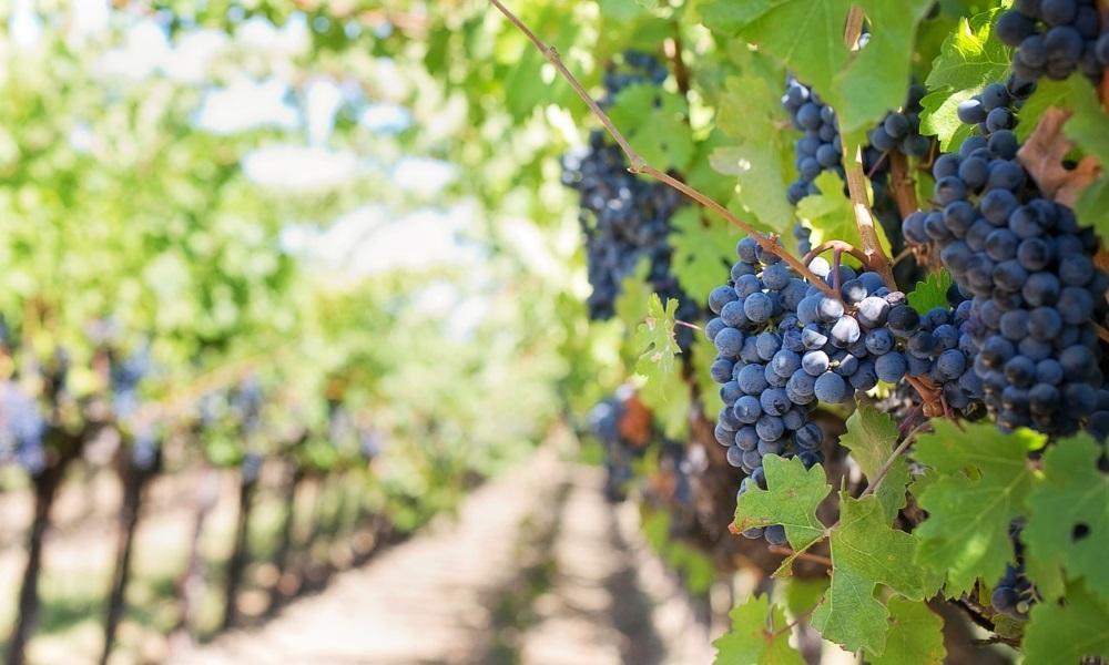 vineyards-margaret-river