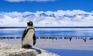 Penguins-ice-snow-nature-Antarctica