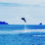 dolphins-bay-of-islands-new-zealand