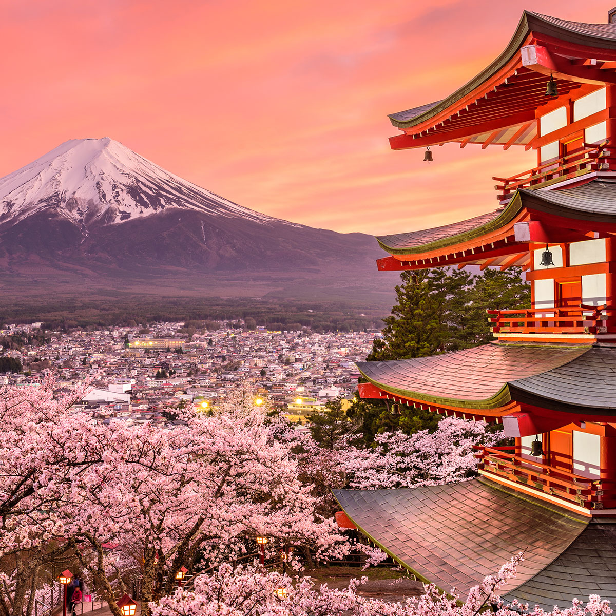 japan-mount-fuji-cherry-blossoms