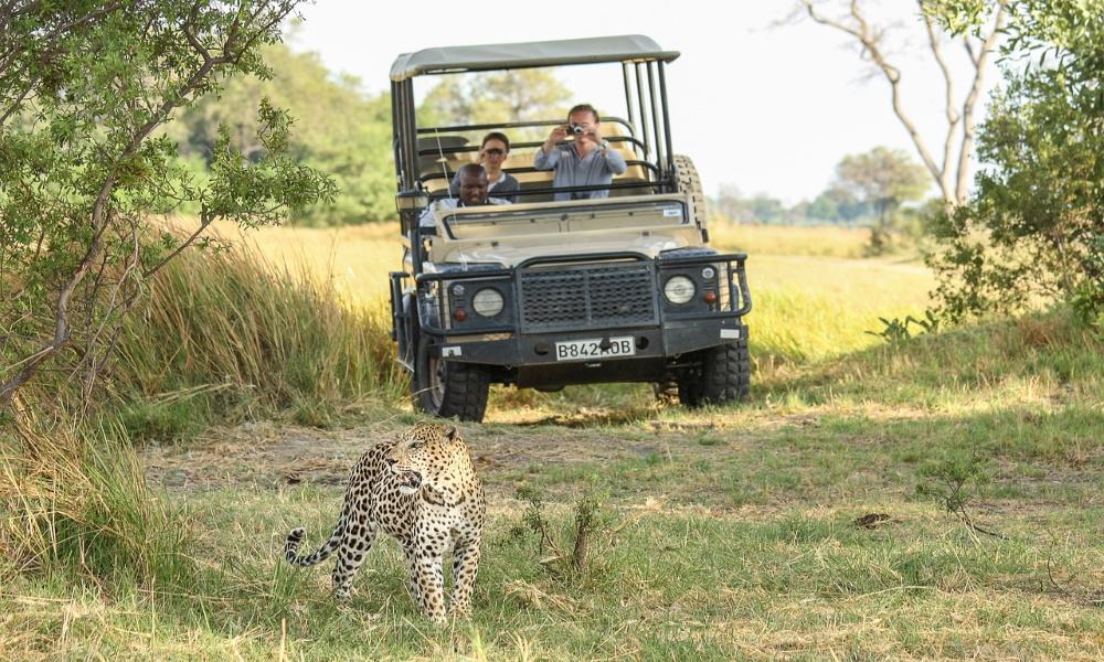 leopard-africa-botswana-wildcat-safari-big-cat