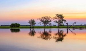 yellow-water-billabong-kakadu-national-park-northern-territory-australia